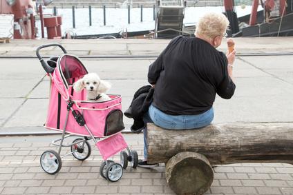 ペットの交通事故について